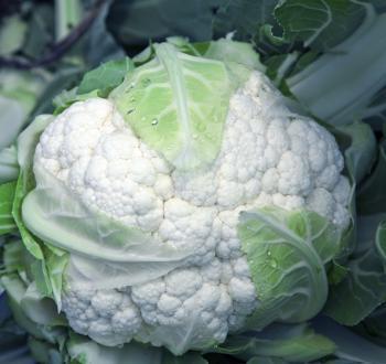 cauliflower vilmorin