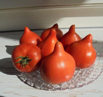 Беатрис томат помидор Вильморин